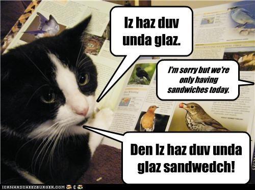 Cheezburger Image 4204261888