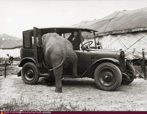 animals cars elephant mom jokes vintage wtf - 4204583168