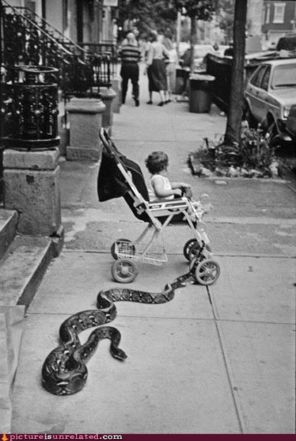 animals,baby,city,danger,snake,vintage,wtf