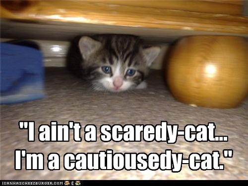 caption,captioned,cat,cautious,cowering,difference,excuse,hiding,i am,just saying,justification,kitten,not,scared,scaredy cat
