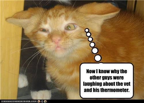 Now I know why the other guys were laughing about the vet and his thermometer.
