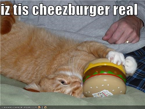 Cheezburger Image 4205636352