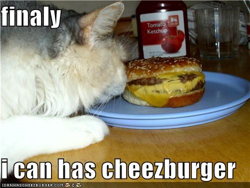 Cheezburger Image 4205643264