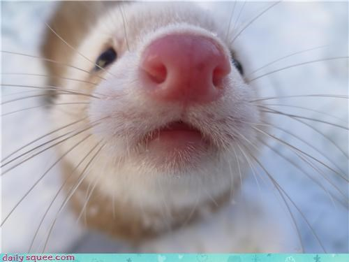 boop boopable ferret woozle - 4205674240