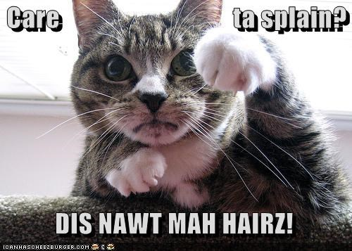 caption,captioned,cat,cat hair,cheating,demanding,evidence,explain,explanation,hair,not mine,question,rhetorical,upset