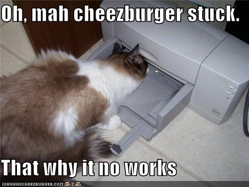 Cheezburger Image 4205754624