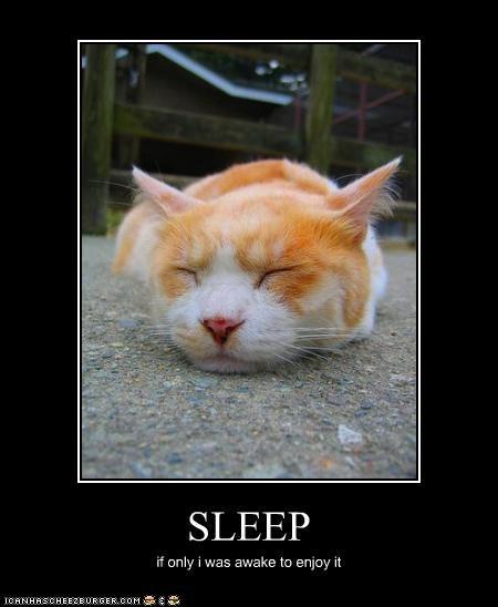 SLEEP if only i was awake to enjoy it