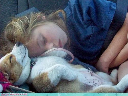 corgi cute dogs girl human sleep - 4206116096