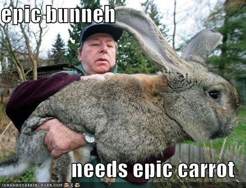 awesome bunny caption captioned carrot epic gigantic huge needs - 4206938624