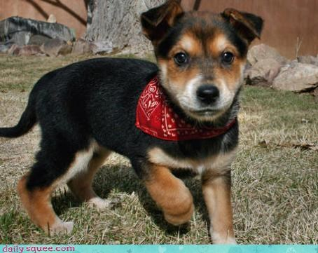 dogs puppy - 4207122432
