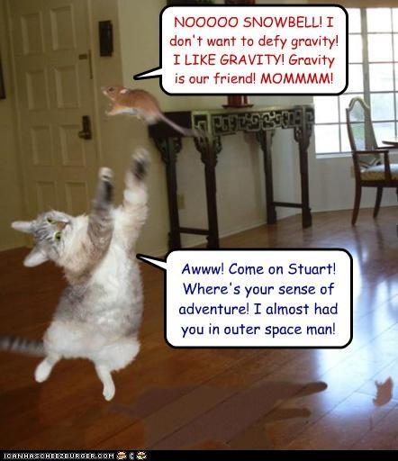 Stuart Little Snowbell Gravity Cheezburger Funny Memes