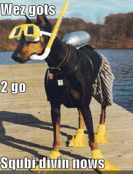 Cheezburger Image 4208147200