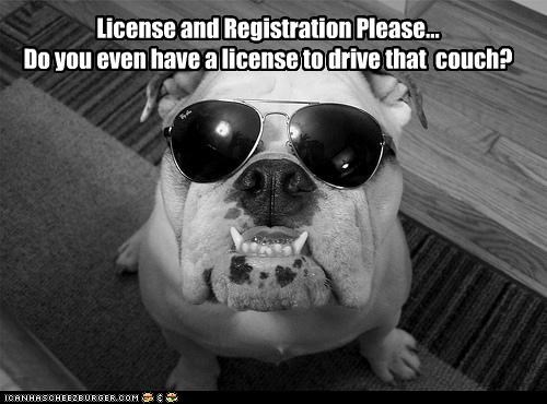 bulldog,couch,license,officer,please,police,pulled over,registration,request,sunglasses