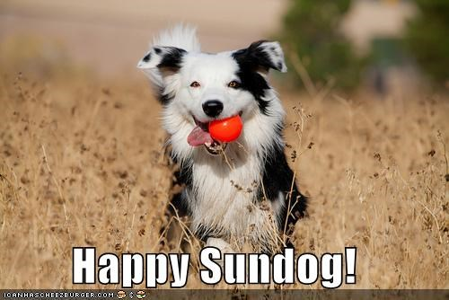 ball border collie fetch fetching field happy happy sundog running Sundog - 4208603904