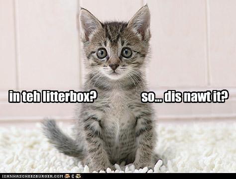 caption captioned carpet cat clarification confused FAIL kitten litter box - 4209284352