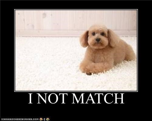 blending in carpet does not FAIL match matching poodle