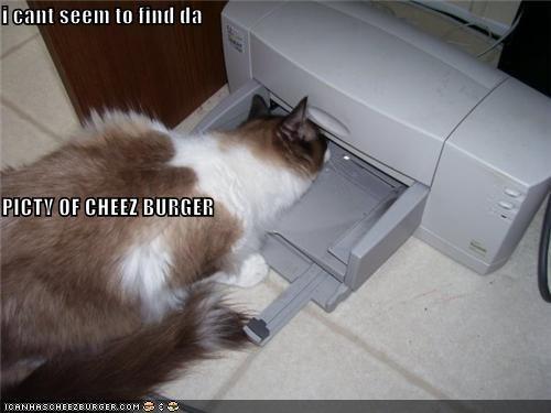 Cheezburger Image 4209514496