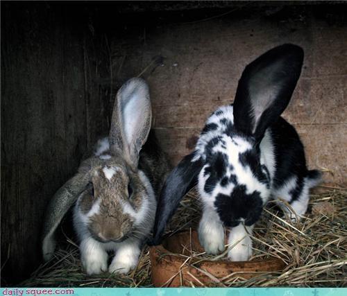 bunny cute ear rabbit - 4209526784