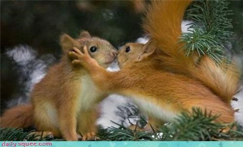 cute KISS squirrel
