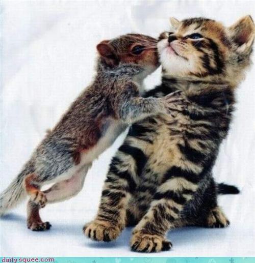 cute KISS kitten squirrel - 4209561600