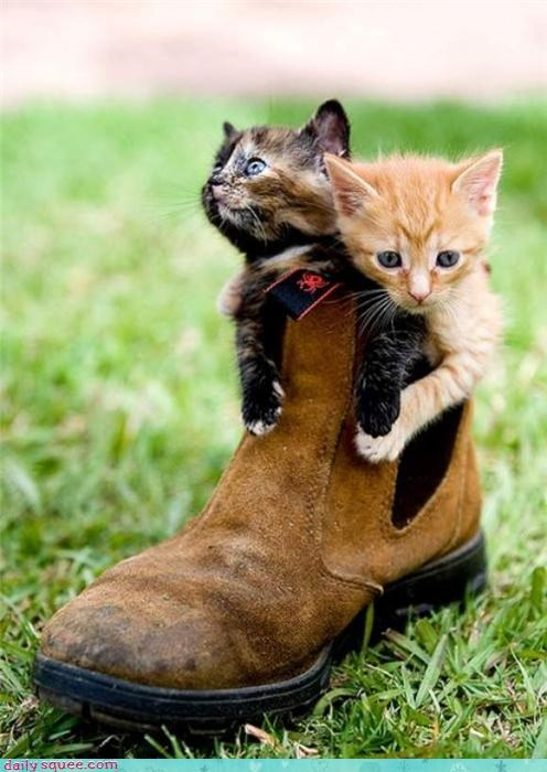 boot,cat,Cats,kitten,literal,Puss in Boots,sitting,stuck