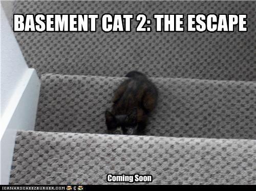 BASEMENT CAT 2: THE ESCAPE Coming Soon