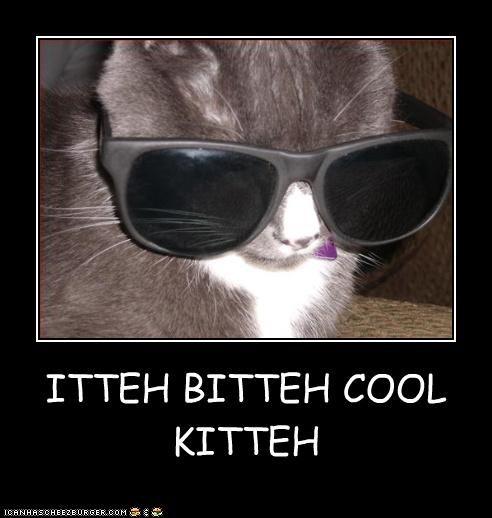 ITTEH BITTEH COOL KITTEH