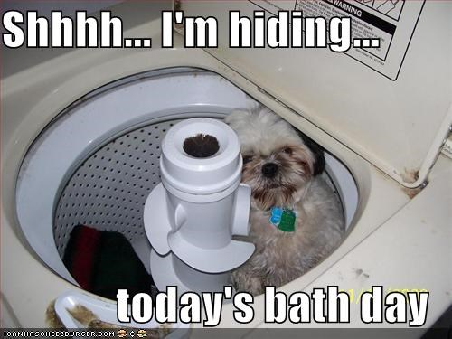 bath bath day bath time dont tell hide hiding shih tzu washing machine - 4210982912