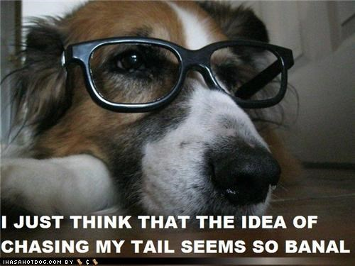 banal,bored,chasing,glasses,Hall of Fame,opinion,pretentious,sheltie,tail,thought,thoughts