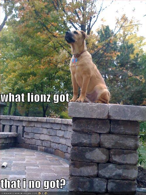 comparison hypothetical jealous jealousy lion mixed breed pit bull pitbull question - 4211459584