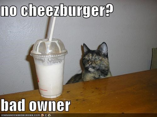Cheezburger Image 4211895808