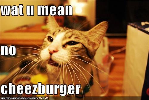 Cheezburger Image 4212074496