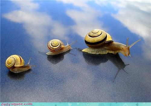 baby cute mom slow snail