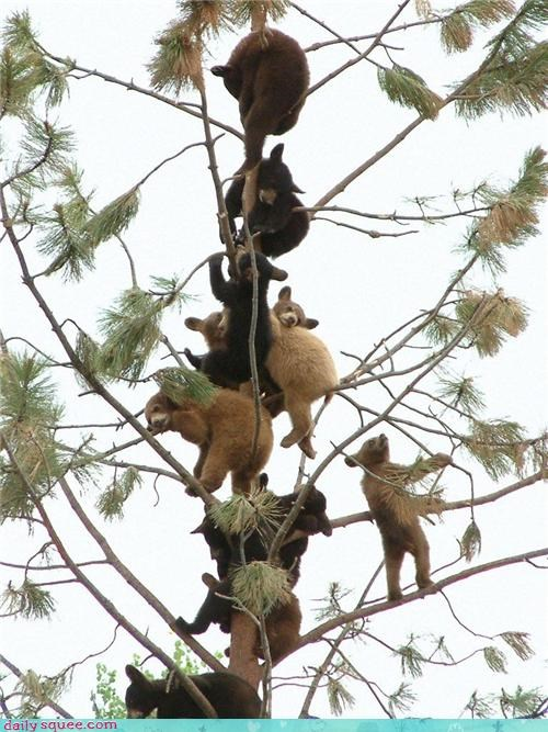 bear climb cute funny tree - 4212794624