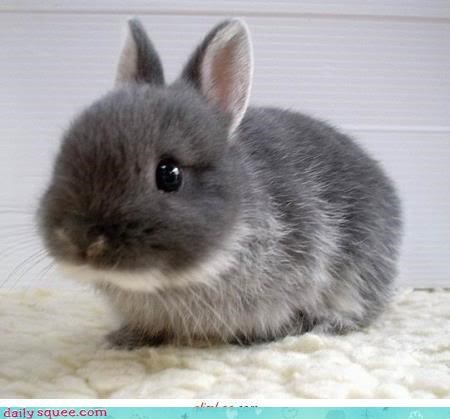 baby bunny cute squee - 4213456896