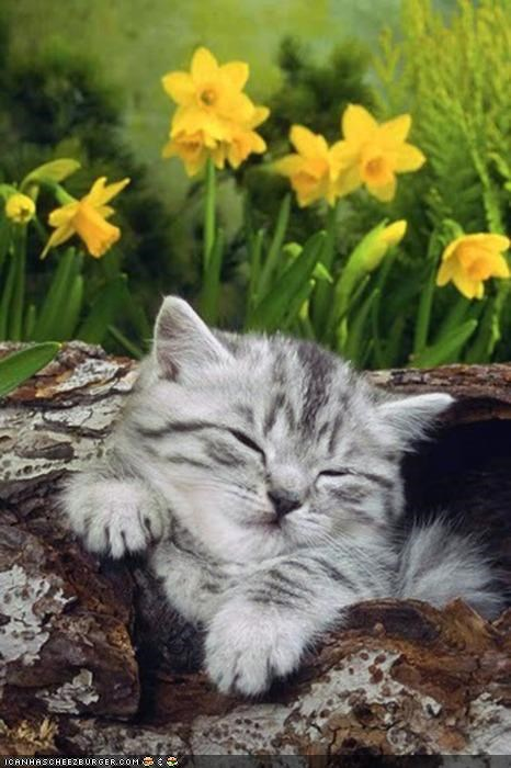 asleep,cyoot kitteh of teh day,log,nap,outdoors,sleeping