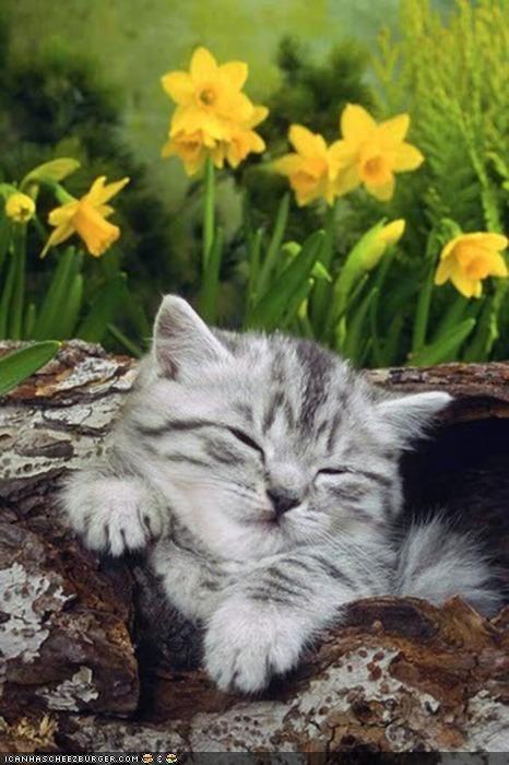 asleep cyoot kitteh of teh day log nap outdoors sleeping - 4214000384