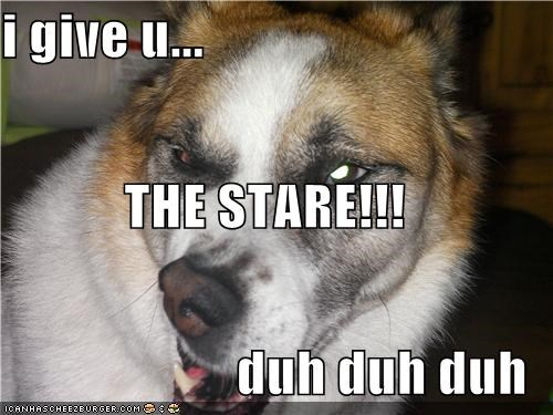 critters,derp,dogs,glare,i has it,stare