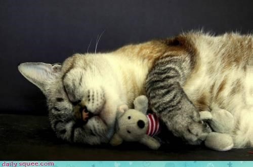 cat Cat Nap cute doll nap teddy - 4214675968