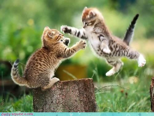 cute fight funny kitten - 4214685696