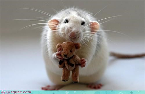 rats stuffed animals teddy bears squee whiskers - 4214698496