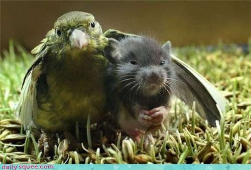 bird,cute,friends,rat