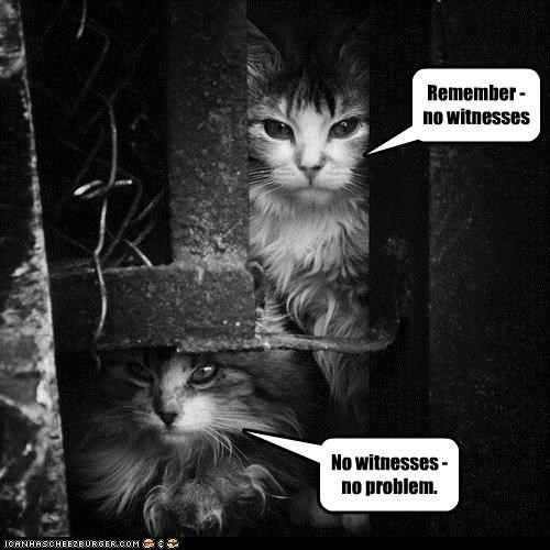black and white caption captioned cat Cats no problem none remember saying witnesses - 4214744064