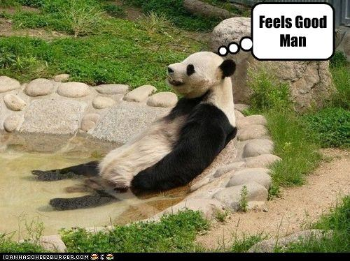 Cheezburger Image 4215032832