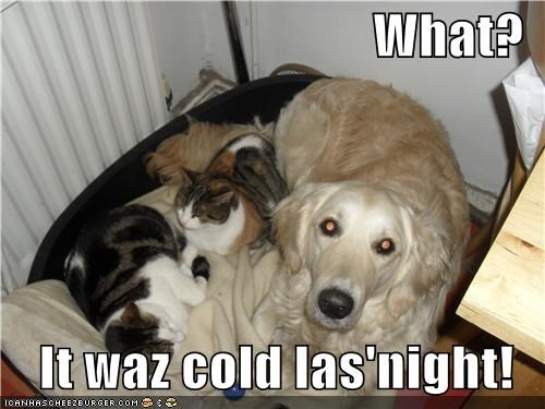bed,cat,cat bed,Cats,cold,excuse,golden retriever,justification,rationale,sleeping