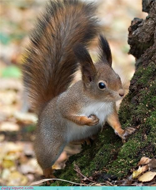 cute ears heart squirrel - 4216080640