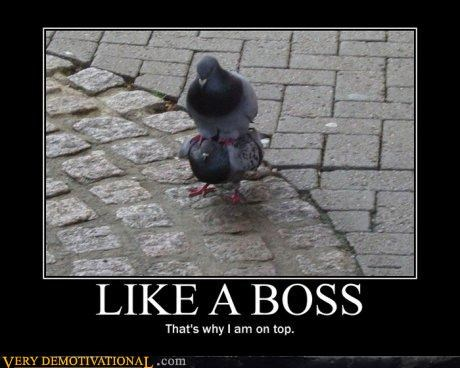 birds hilarious Like a Boss Memes pigeons rules - 4216342272