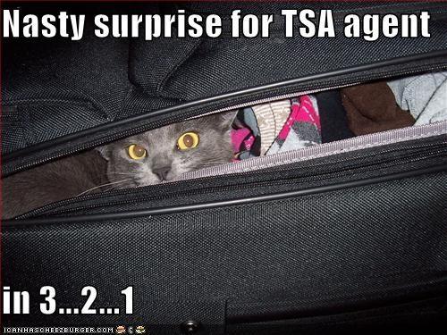 1 2 3 caption captioned cat countdown Hall of Fame hiding nasty peeking suitcase surprise TSA - 4217182464