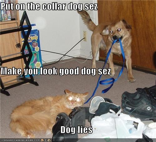 advice cat collar golden retriever leash lying mixed breed prank trust upset - 4217200384