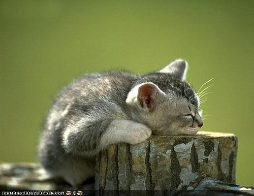 comfort is relative cyoot kitteh of teh day nap nature sleeping - 4217535744